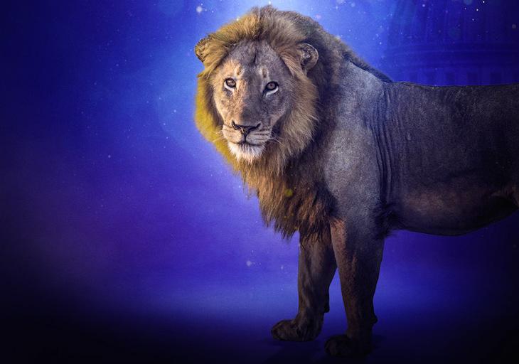 lioncenter